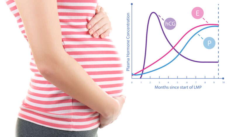cryptic-pregnancy